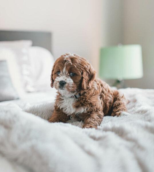 hotel-pet-friendly